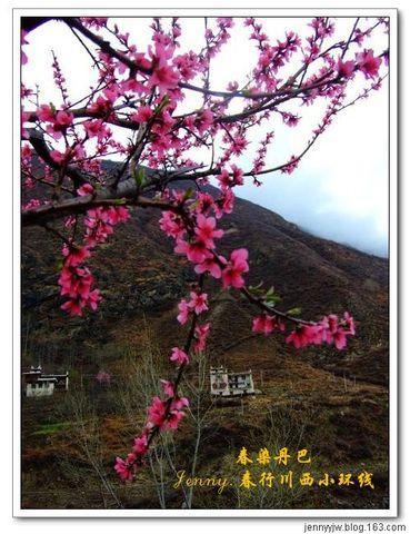 2008川西的春天.5.--春染丹巴(再续)--更新中 - jennyyjw - yang-jenny的旅行博客