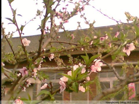 我家的小院 - 光年——青龙 - 光年---青龙