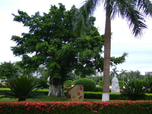 6.海南大学旅游学院 - 罗玉树 - 用文字打败时间。