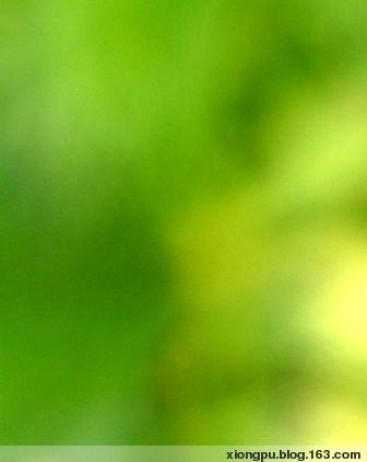 色  彩 - BERRYTREE - 熊璞的博客