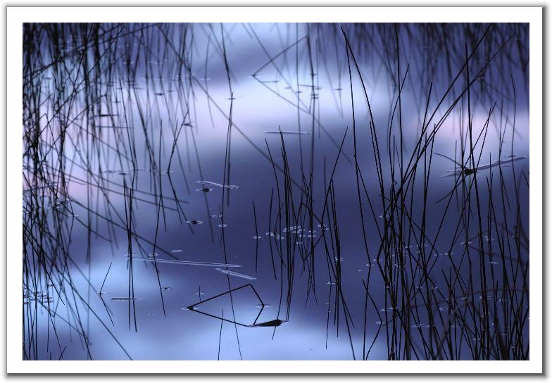 故乡(组诗) - yonghaiyin - 暗焚琴木一点香