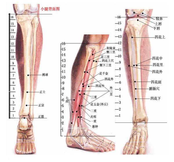 从双腿看到全身病 - xing_fu8868 - xing_fu8868 的博客
