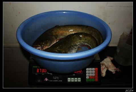 钓了一条5斤重的塘室 - 皮杰 - 皮杰闲看
