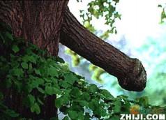大自然——巧夺天工 - 春光 - quguangchun1 的博客