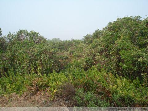 珠 海 红 树 林 - 笑因宽容 - 笑因宽容的博客