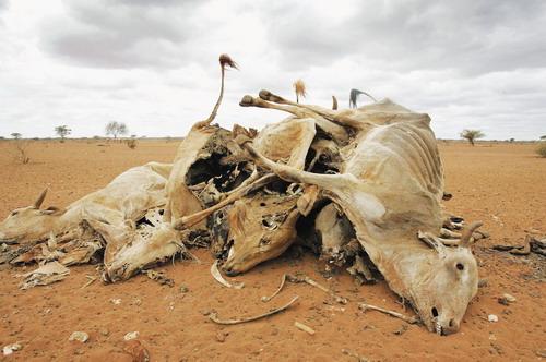 动物生死观 - 《新发现》杂志官方博客 - 《新发现》杂志官方博客