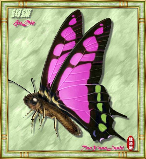 手绘蝴蝶图片欣赏(55P) - 武士雄风 - 武士雄风
