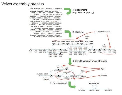 浅探de novo assembly - fhqdddddd - 流浪云南