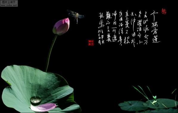【原创】为自己创造一个纯净美好的心灵世界 - 笔架飞湖 - 笔架飞湖