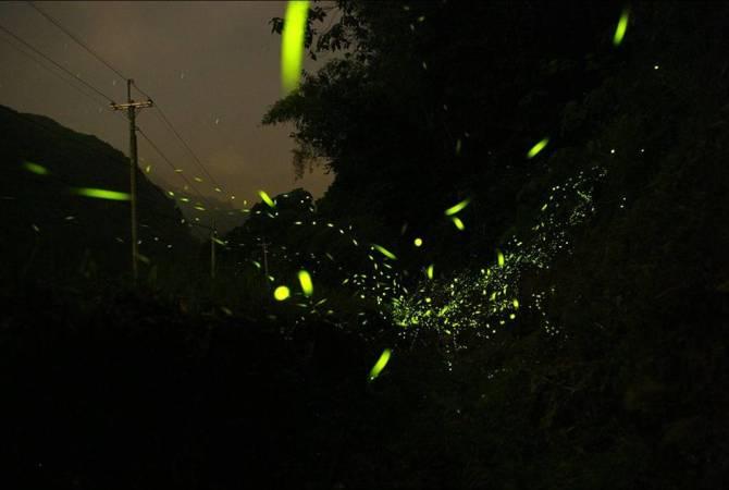 《萤火虫的梦》
