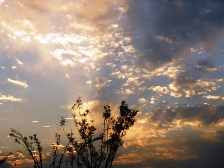 8/16鸟巢看田径---奥运杂记2 - 老虎闻玫瑰 - 老虎闻玫瑰的博客