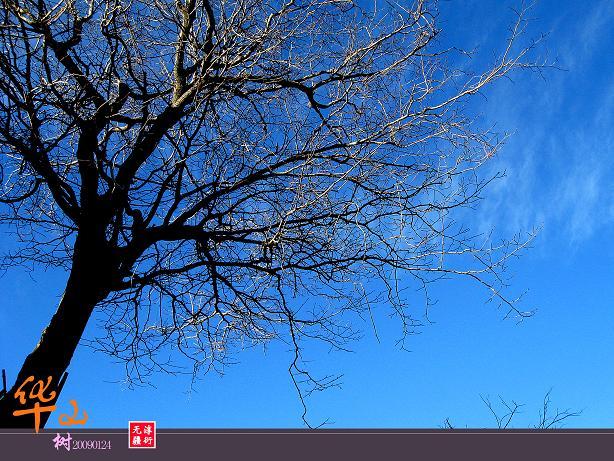 2009年2月12日 - zy7312 - zy7312