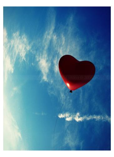 冬 瓜 的 爱 情 - 叶可 - 栀子花的幸福