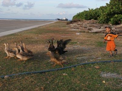 中国南沙南威岛----越南猪悠闲着呢! - 汉子 - 汉子的博客