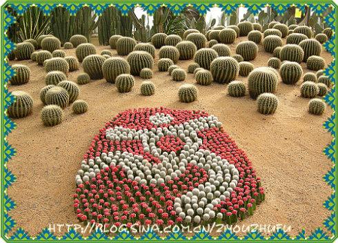 世界花卉大观园(2) - 自由主妇 - 自由主妇
