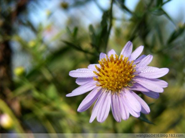 秀一下今早拍的照片 - 人淡如菊 - 人淡如菊的博客