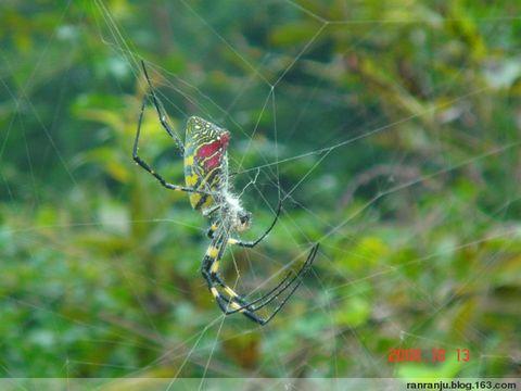 今天清晨,我去看望了一只蜘蛛(原创) - 木头格子 - 下营街三十八号