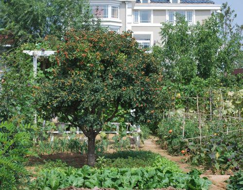庭院菜园 - 枫林绿洲别墅景观设计