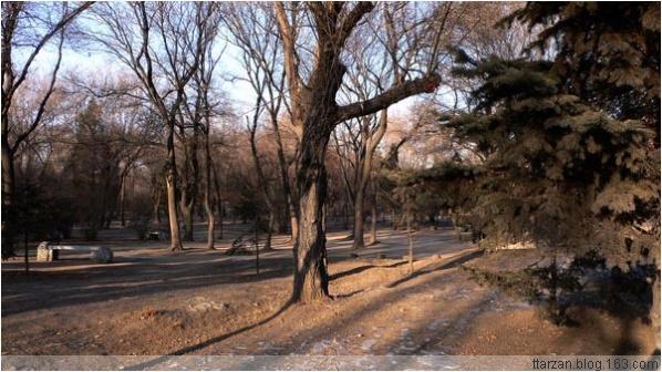 [原]沈阳·鲁迅美术公园周边 - Tarzan - 走过大地