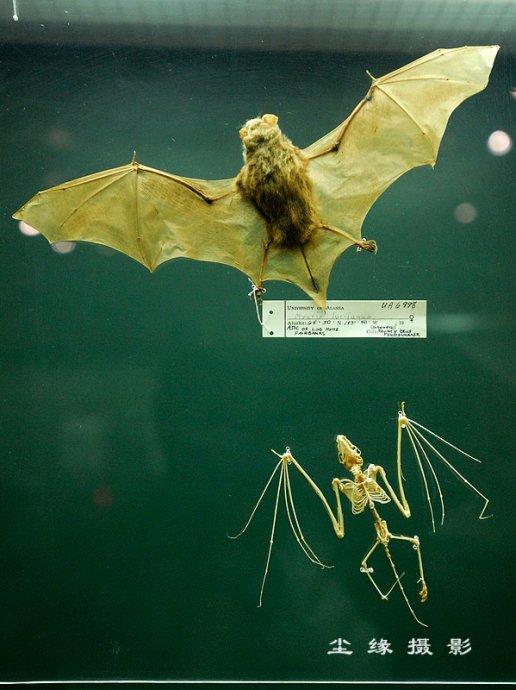 参观费尔班克斯的阿拉斯加大学博物馆 - Y哥。尘缘 - 心的漂泊