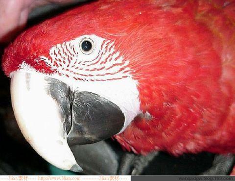 2009年2月24日 - 红海滩 - 红海滩古玩综合博客