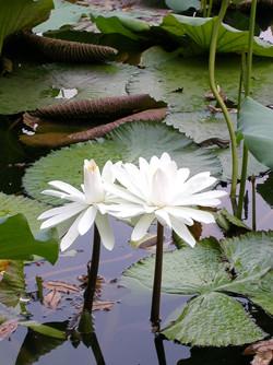摄 花 --与爱花者共鸣 -