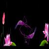 最全最漂亮的鱼透明动画