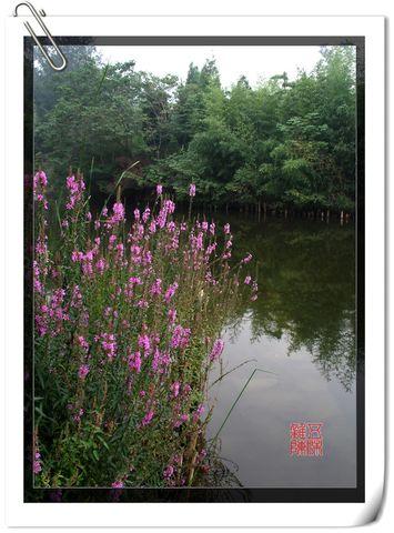 自然中的情趣《原创摄影》 - 五味杂陈 - 我的人生驿站