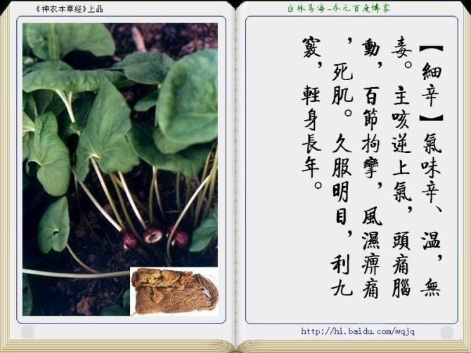 中草药、药性(图文)  - 逍遥客 - 逍遥客