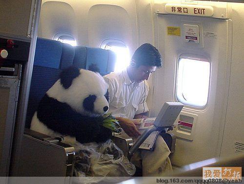 可爱的大熊猫 - 分享快乐 - 我成长    我快乐