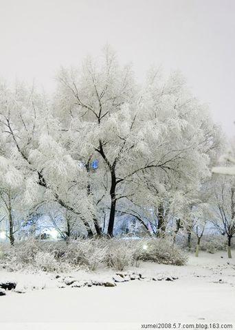 引用 雪 - 梅魂 - 梅魂