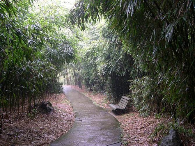 竹林听雨 - 16888 - sxl5915568 的博客