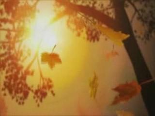 秋日的私语 - 老秋 - 老鱼吹浪的博客