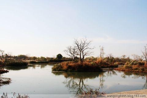 冬日的西溪湿地 - 如果 - 我的博客