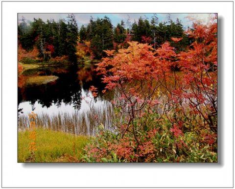 六月荷花摄影诗歌《思念》(24) - 六月荷花 - 六月荷花的池塘
