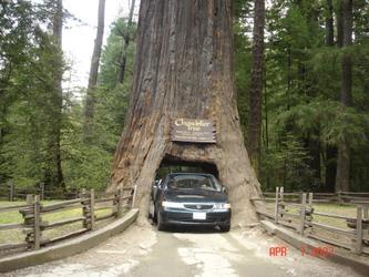 大树洞之旅