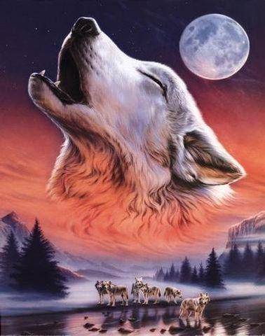 【转帖】狼的爱恋 - 西北狼大王的日志 - 网易博