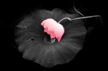 黑色梦幻背景 - 孤花明月 - 孤花明月魂DE博客