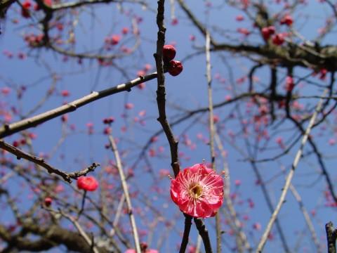 春 - angel.yzx - 惠风和畅