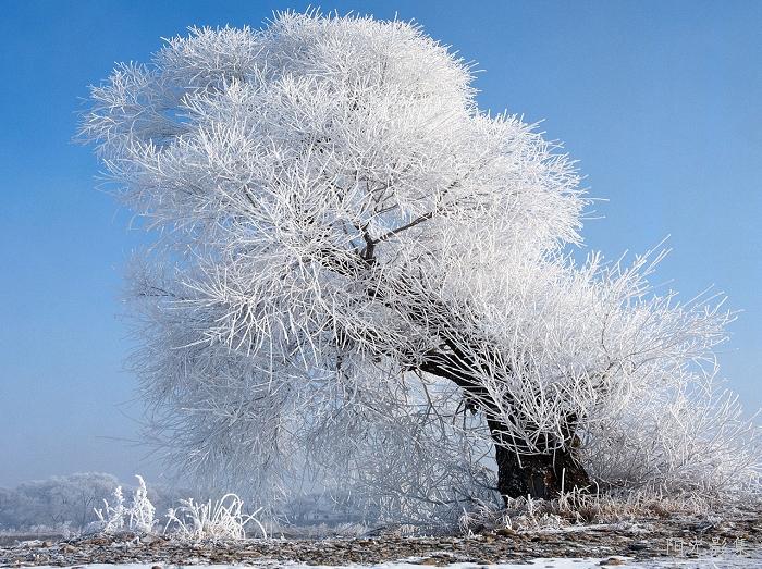 中国四大自然奇观-吉林雾凇-楚天的日志-网易