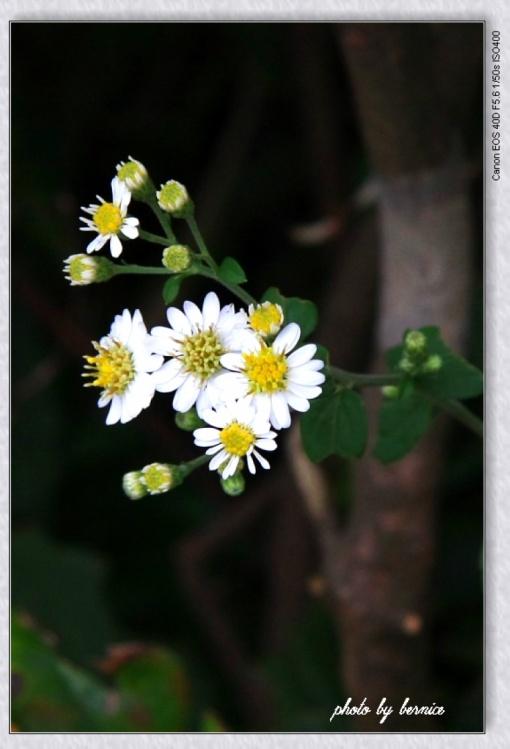 引用 【原创摄影】秋日私语 - 青青茉莉花 - 保护自然.崇尚真理.热爱生活