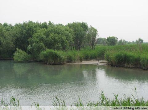 合阳洽川黄河湿地游记 - 花枝俏 - 踏遍青山人未老