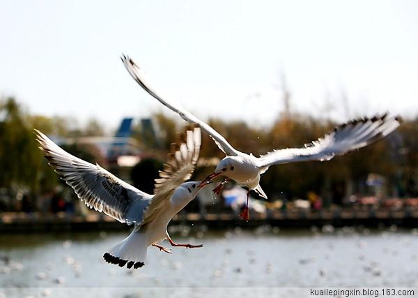 【转载】(搜集整理)天上飞来比翼鸟(图) - 四叶草 - 四叶草的天空
