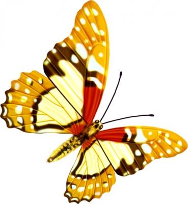 【转载】漂亮的蝴蝶图 - xiao-yu2888 - xiao-yu2888的博客