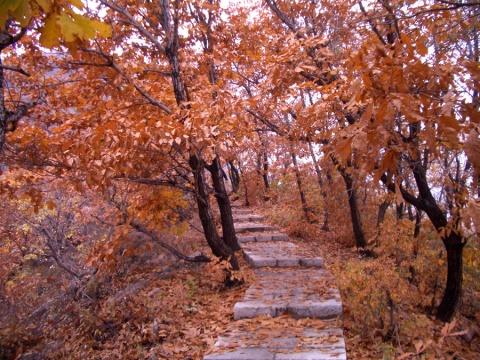 [原创]秋叶浓情 - Kajia - 脚印一点点