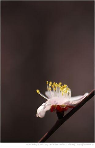 康之园 荷花荷叶纹身手稿 > 莲花瓣纹身手稿  莲花瓣纹身手稿 宽741×