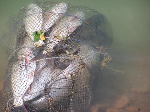 鱼乐无穷 - 神钓 - 神钓