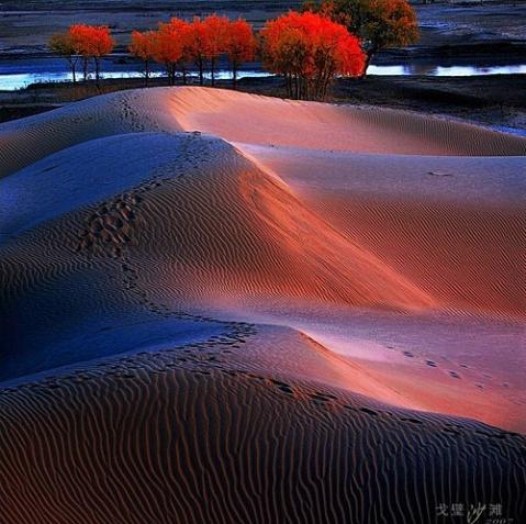 红柳豪歌放【疏勒河的红柳原创】 - 疏勒河的红柳 - 疏勒河的红柳