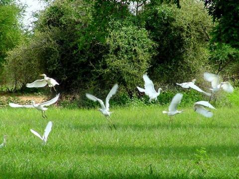 苏丹的热带鸟群 - 淡淡云天 - 淡淡云天