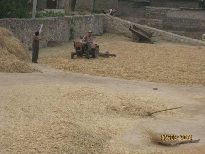又到麦收时,这些场景你还记得吗? - susan - 沉思的年华